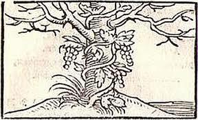 Emblema de la vid y el olmo enlazados
