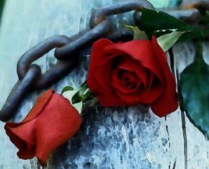 Rosas y cadenas