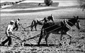 Campesinos arando