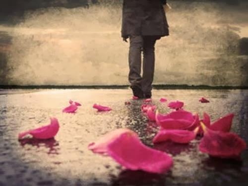 Rosa deshojada