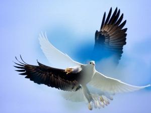 Águila y paloma
