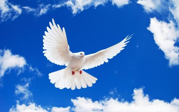 Paloma-blanca-en-vuelo.jpg