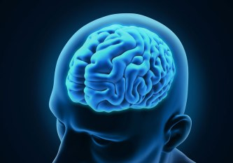 Corteza-cerebral.jpg