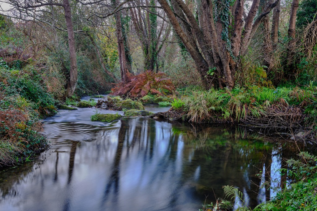 Remanso de un río entre árboles
